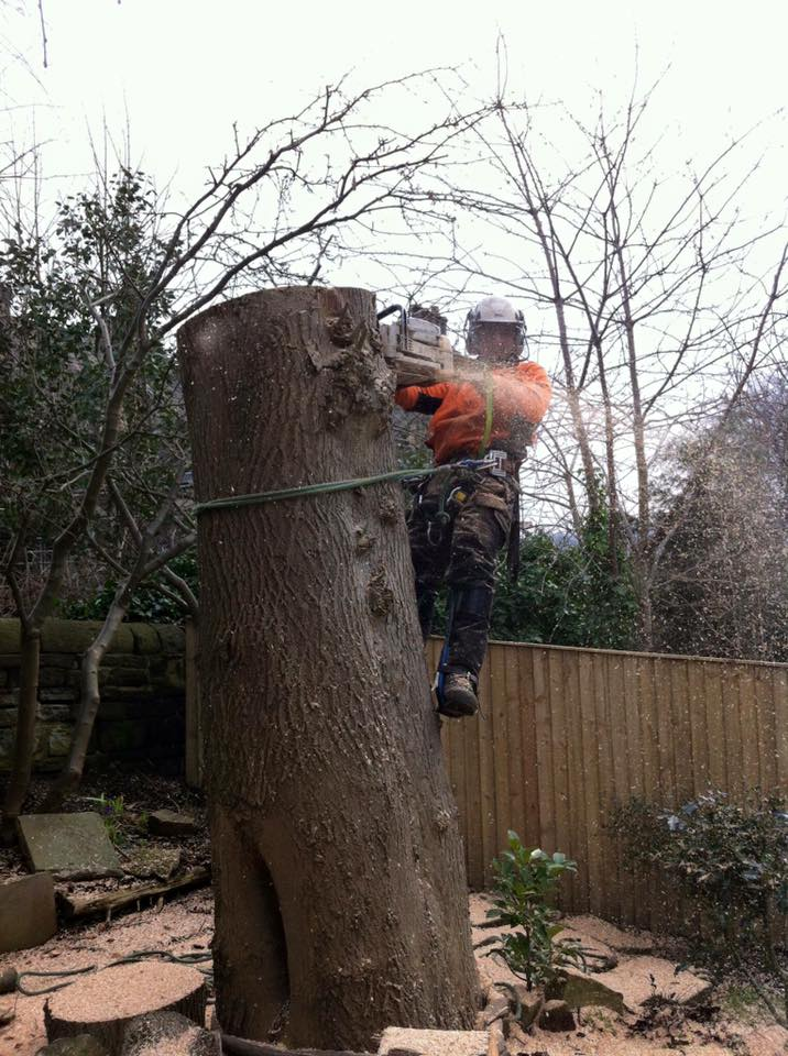 Tree surgeon Shipley