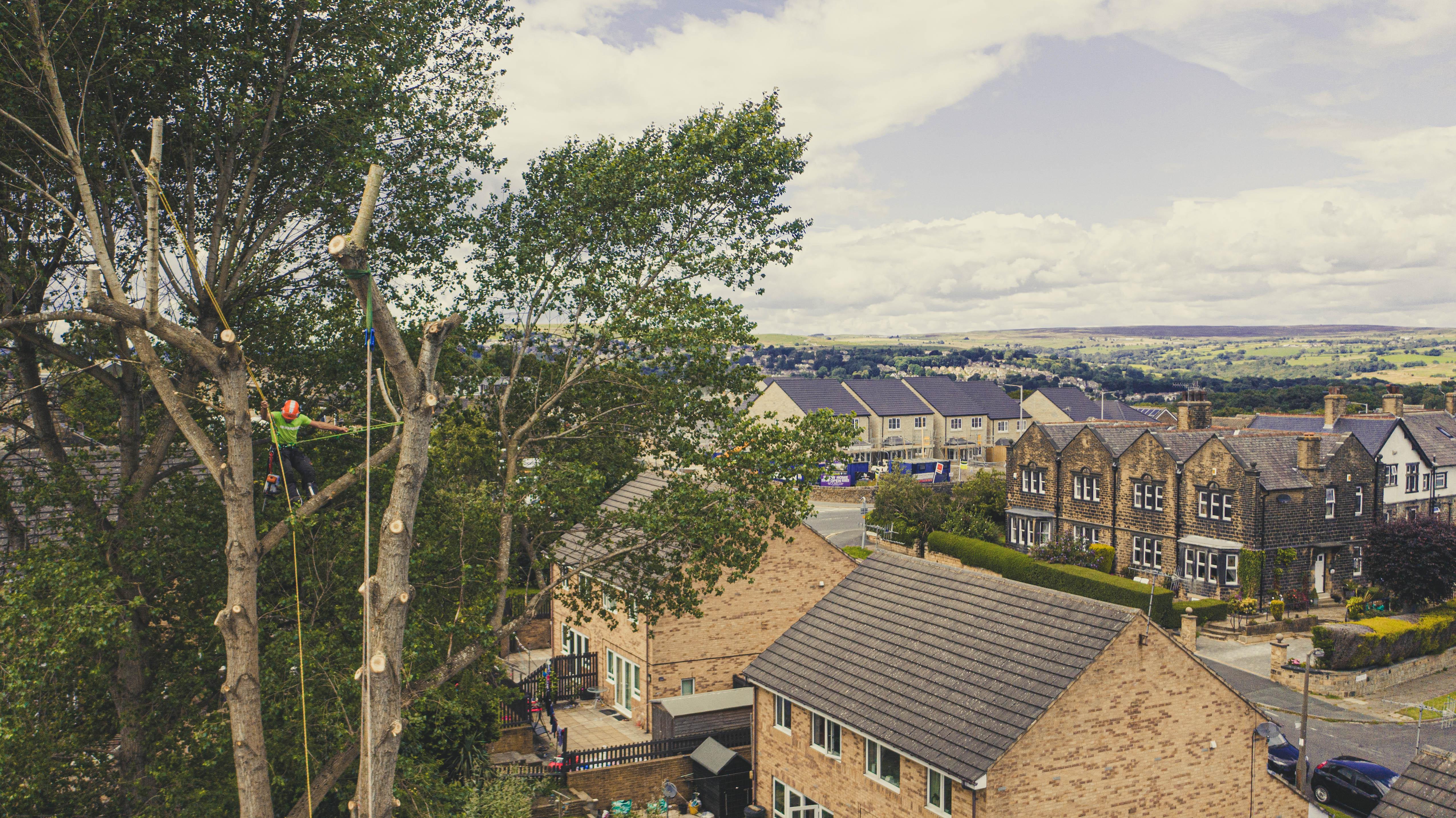 West-Yorkshire-Tree-Dismantle-3