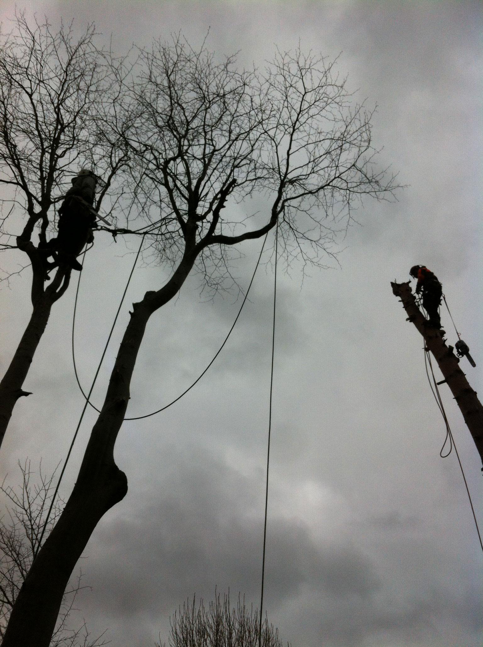 Tree Surgeon Halifax
