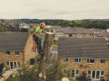 West-Yorkshire-Tree-Dismantle-6