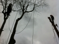 Tree Surgeon Halifax